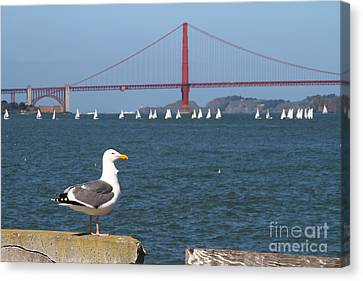 Seagull Enjoying The Sailboats On The San Francisco Bay . 7d14041 Canvas Print by Wingsdomain Art and Photography