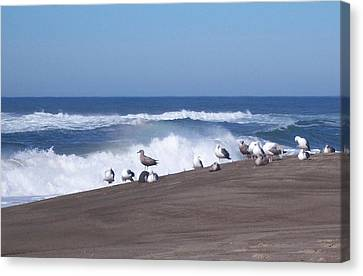Seagull Hang-out Canvas Print by Peter Mooyman
