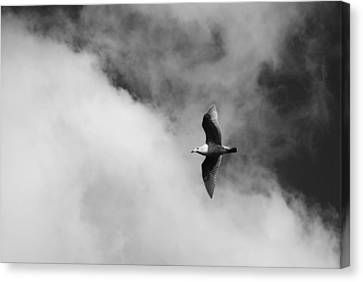 Flying Gull Canvas Print - Seagull In The Clouds by Twenty Two North Photography