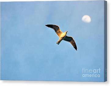 Canvas Print featuring the photograph Seagull by Luciano Mortula