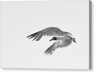 Seagull Canvas Print by Miguel Celis
