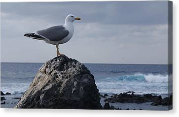 Seagull Canvas Print by Luis and Paula Lopez
