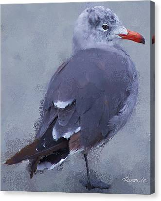 Seagull Portrait I Canvas Print