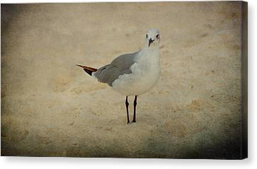 Gull Canvas Print by Sandy Keeton