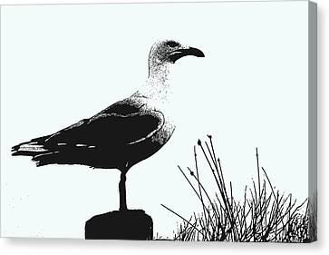 Seagull  Canvas Print by Serene Maisey