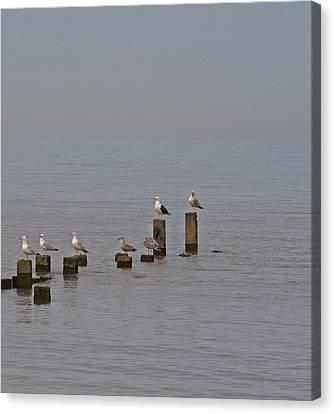 Seagulls At Rest Canvas Print by Camera Rustica Bill Kerr