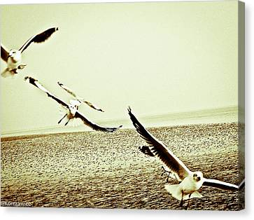 Seagulls Beneath The Wings Canvas Print