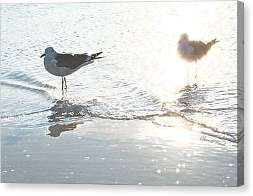 Seagulls In A Shimmer Canvas Print by Olivia Novak