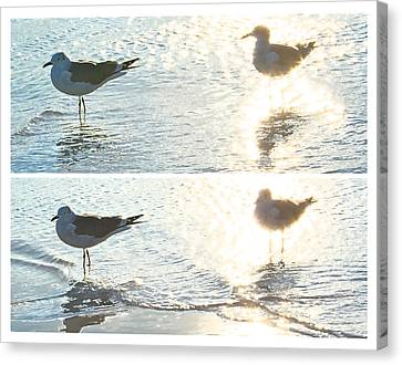 Seagulls In A Shimmer Two Views By Olivia Novak Canvas Print by Olivia Novak