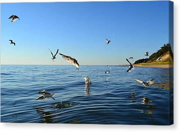 Seagulls Over Lake Michigan Canvas Print by Michelle Calkins