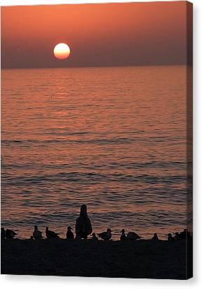 Seagulls Watching Sunset Canvas Print