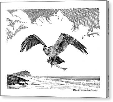 Osprey Canvas Print - Seahawk Dinnertime by Jack Pumphrey