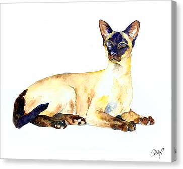 Sphynx Cat Portrait Canvas Print - Seal Point Siamese Cat Old by Christy  Freeman