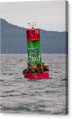 Seals On The Bouy Canvas Print