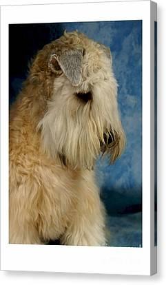 Sealyham Terrier 915 Canvas Print by Larry Matthews