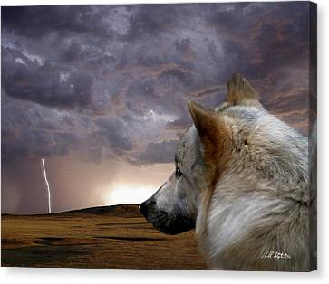 Searching For Home Canvas Print by Bill Stephens