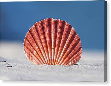 Seashell In Sand With Blue Ocean Background Canvas Print by Tanya Ann Photography