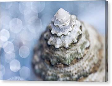 Seashell Canvas Print by Lauren Tolbert Miller