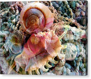 Seashell Reflections Canvas Print by Shirley Sirois