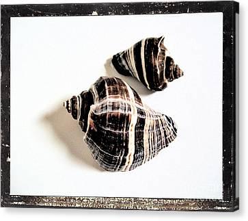 Seashells A Canvas Print by Marsha Heiken