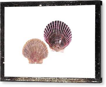 Seashells D Canvas Print by Marsha Heiken
