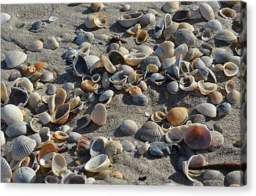 Seashells In The Sand Canvas Print by Brenda Thimlar