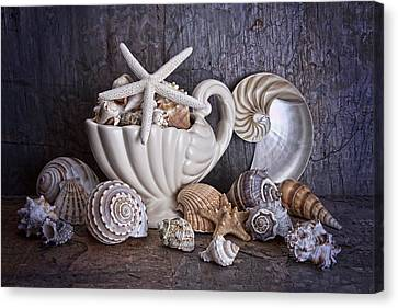 Seashells Canvas Print by Tom Mc Nemar