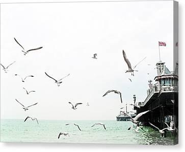 Seaside Seagulls Canvas Print by Richard Newstead