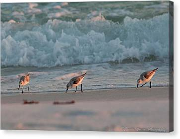 Canvas Print featuring the photograph Seaside Trio by Charles Warren