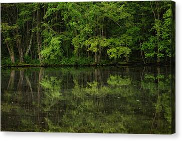 Season Of Green Canvas Print by Karol Livote