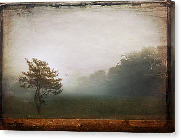 Season Of Mists Canvas Print by Evelina Kremsdorf