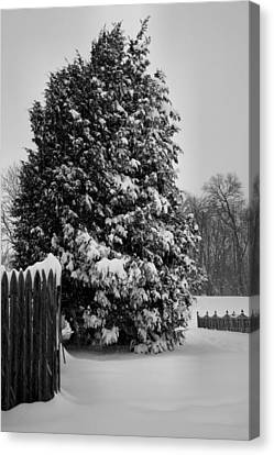 Season Of White Canvas Print by Steven Ainsworth