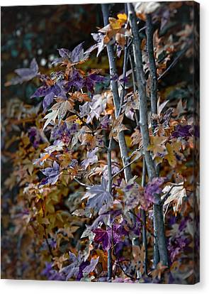 Seasonal Changes Canvas Print by Michael Putnam