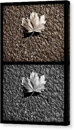 Seasons Of Change Canvas Print by Luke Moore