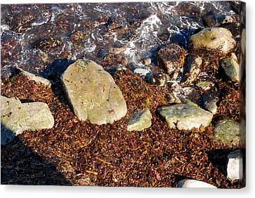 Seaweed By The Shore Canvas Print