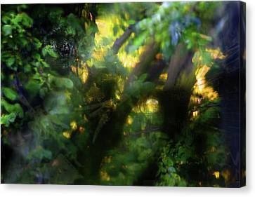 Canvas Print featuring the photograph Secret Forest by Richard Piper