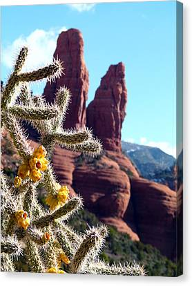 Canvas Print featuring the photograph Sedona Flowering Cholla by Cindy Wright