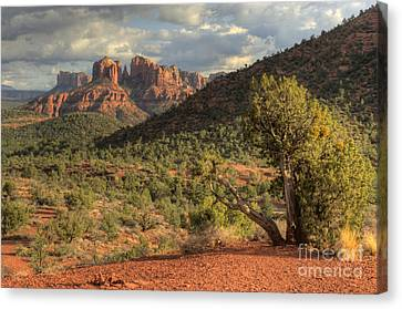 Sedona Red Rock Viewpoint Canvas Print by Sandra Bronstein