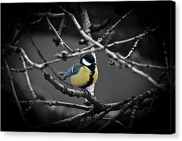 Selective Bird Canvas Print
