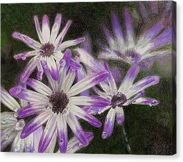 Canvas Print - Senetti Pericallis by Steve Asbell
