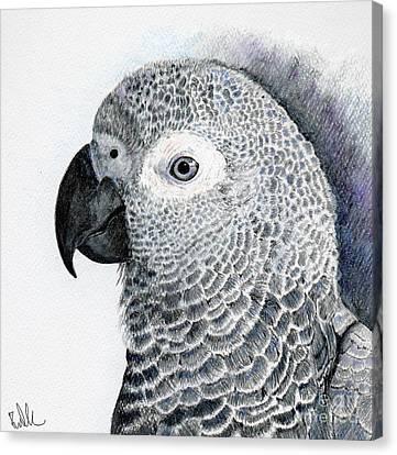 Sensitive African Grey Canvas Print by Barb Kirpluk