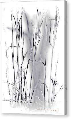 Sentinel Shadow Canvas Print