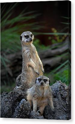 Sentry Canvas Print by Skip Willits