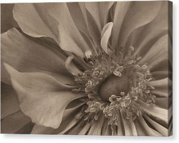 Sepia Floral Canvas Print by Kristin Elmquist