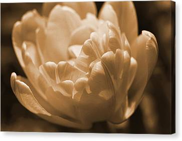 Canvas Print featuring the photograph Sepia Tulip Frill by Peg Toliver