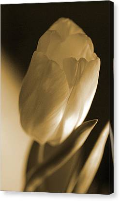 Canvas Print featuring the photograph Sepia Tulip by Peg Toliver