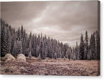 Canvas Print featuring the photograph Sequoia by Mike Irwin