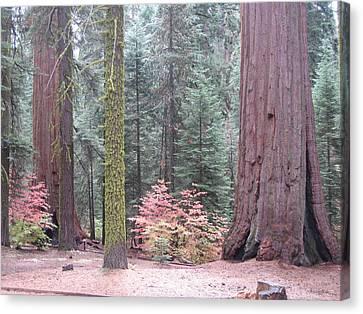 Sequoia  Trees  Canvas Print by Naxart Studio