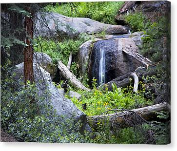 Sequoia Waterfall Canvas Print by Anthony Citro