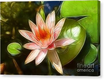 Serene Pink Waterlily  Canvas Print by Darleen Stry